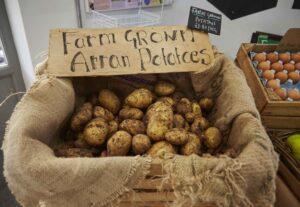 Arran potatoes at Windmill Hill City Farm
